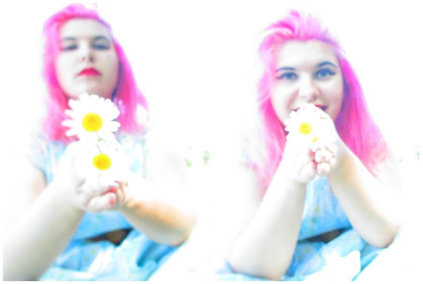 daisiesVIII