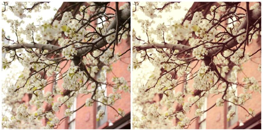 blossomsXIV